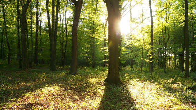 HD TIME LAPSE: Green Forest With Shadows And Sun