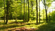 HD TIME LAPSE: Green Forest With Shadows