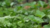 Green garden leaves