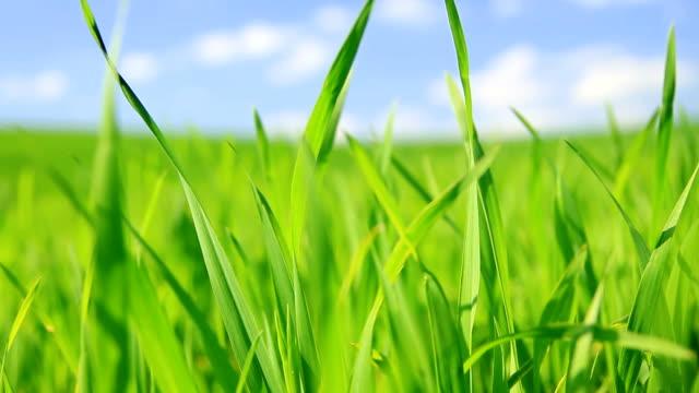 Grüne Gras Hintergrund-HD