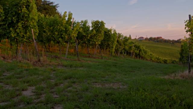 WS DS Green Grass Between Vineyards