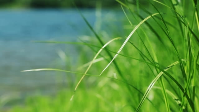 Green grass by the river