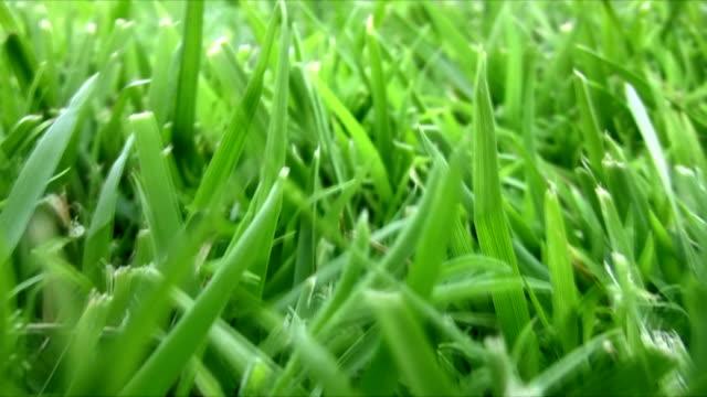 Green Grass Journey