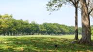 Grüne Gras Yard und Bäume im Park