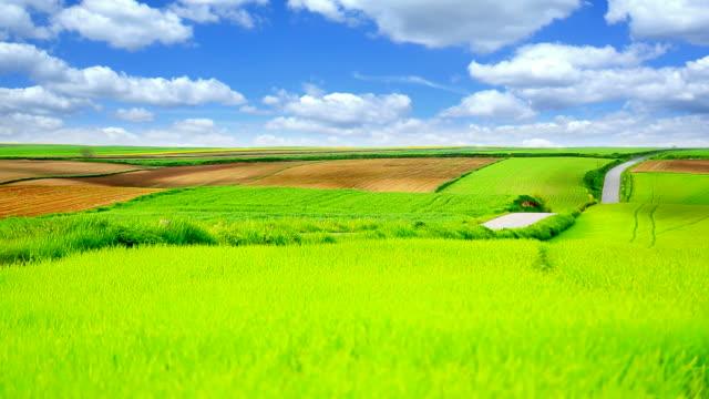 Grüne Landschaft-HQ 1080 p