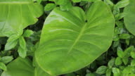 Green leaves in tropical rainforest