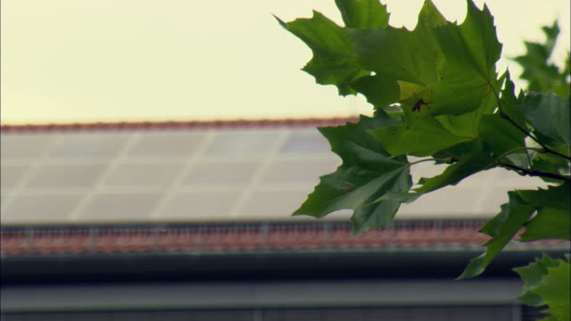 CU R/F Green leaves of tree with solar panels lining rooftop behind / Marburg, Germany