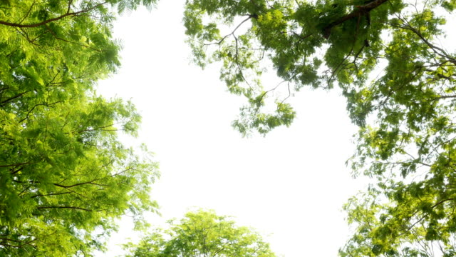 Gröna blad på vit bakgrund