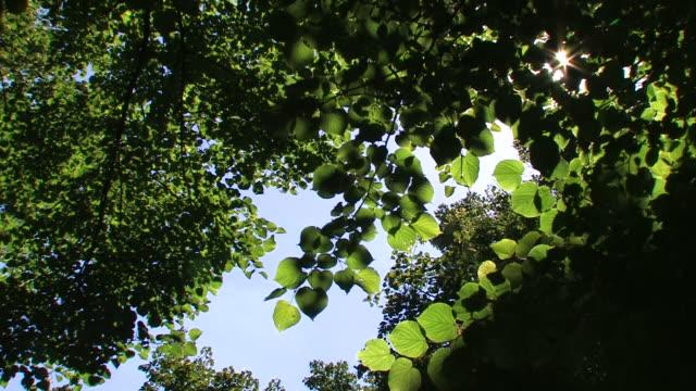 Grüne Blätter mit Sonnenlicht