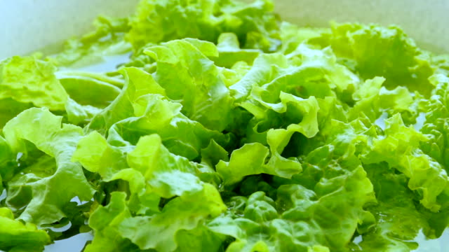 green lettuce, close-up