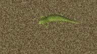 Green Lizard Camouflage Render