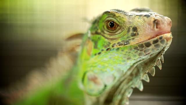 Green Lizard Green Lizard finding food