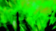 FLASH THROUGH A BUNCH OF DAFFODILS : green, long version (loop)