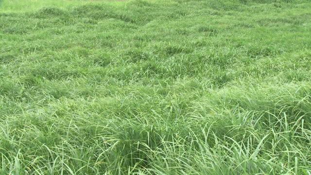 HD: Green meadow