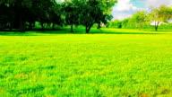 Grünen Wiese