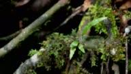 Green moss in neture slide shot.