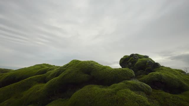 Groene mos, IJsland.
