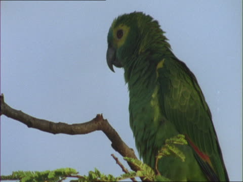 A green parakeet perches on a branch.