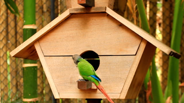 Green parrot on wooden cage