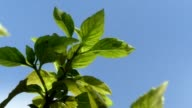 Green plant and blue sky