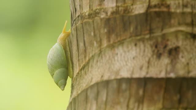 Green snail on palm trunk, wide macro