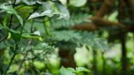 Green Snake on branch tree.