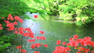 Green stream with red flowers