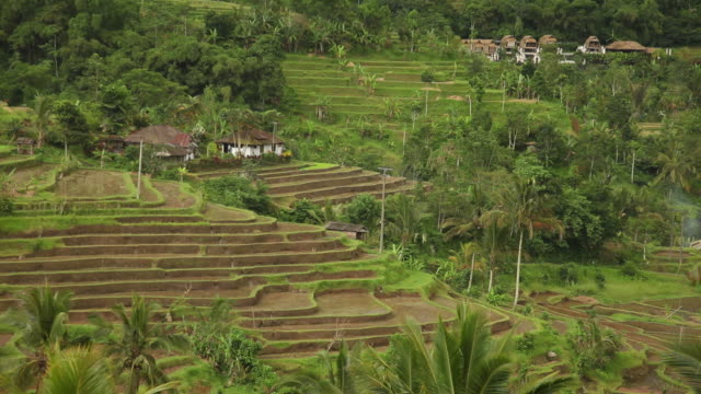 WS HA Green terraced fields / Bali, Indonesia