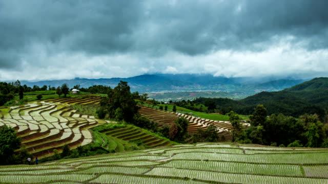 Green Terraced Rice Field