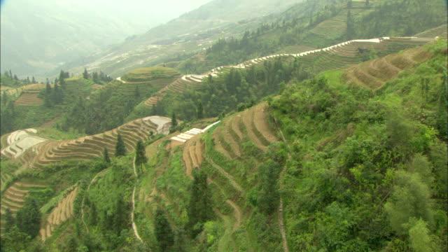 WS HA PAN Green terraced rice fields on hillside, Guilin, Guangxi Zhuang Autonomous Region, China