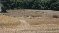 WS A green tractor harvests a wheat field