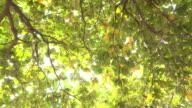 green tree, 4k