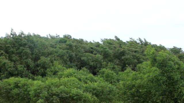 Albero verde contro il vento