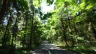 Green tree road Driving a car