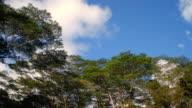 T/L WS LA Green tree tops against blue sky / Provo, Utah, USA