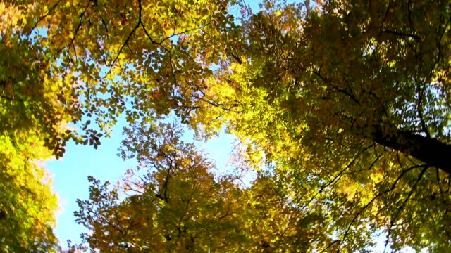 HD: Grüne Bäume