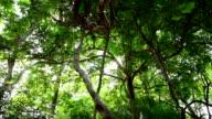 Grüne Bäume.
