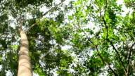 HD: Green Trees