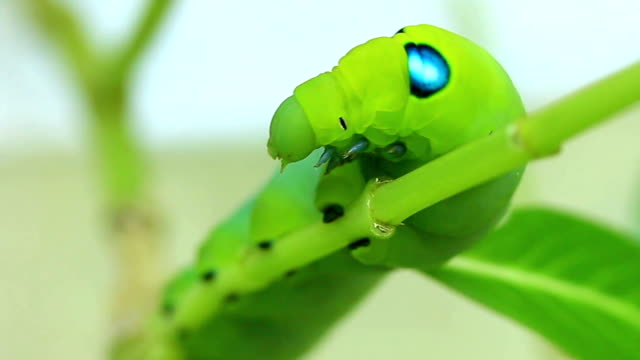 Green worm moves on branches