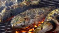 CU Grilling Fish