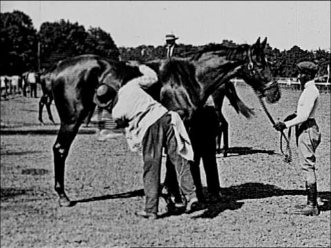 grooms wiping down thoroughbred groom covering thoroughbred in blanket horses from Harry Payne Whitney's stable handlers / grooms leading...