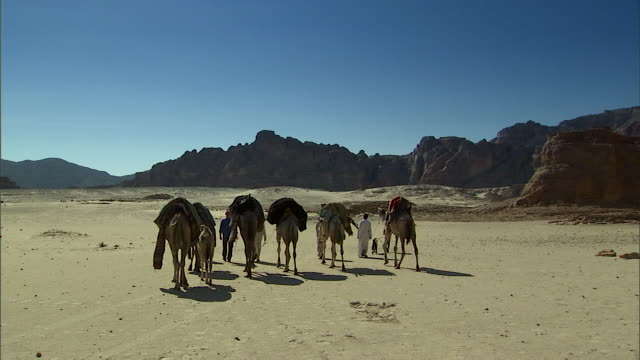 WS POV Group of bedouin with camels crossing desert / Sinai, Egypt
