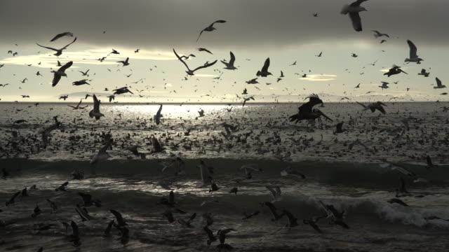 A group of bird circular mouvement