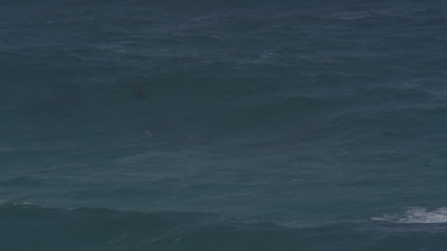 Group of Bottlenosed dolphins swimming then turn to ride in surf wave and visible underwater