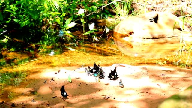 Gruppe der Schmetterlinge