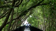 Group of children walking at mangrove forest.