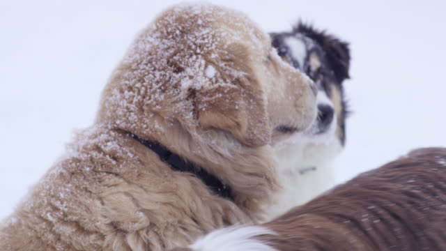 Group of Dogs in the Snow