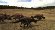 CGI, WS, Group of Einiosaurus running on field