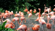 Group of Flamingos in the forest