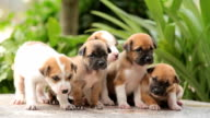 Group of little puppies dog